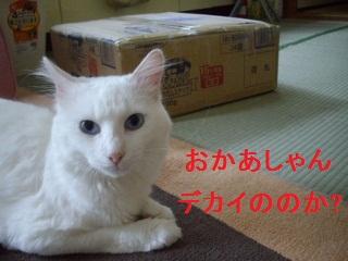 IMGP1533 (320x240)