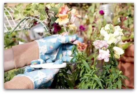ガーデン手袋