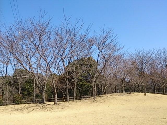 miyajima-P7