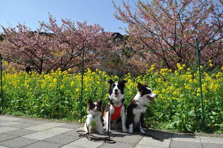 2012.3.20 伊豆お花見 053