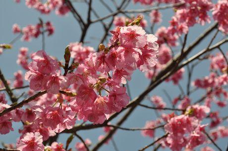 2012.3.20 伊豆お花見 103