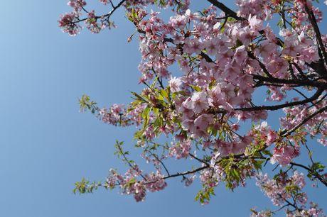 2012.3.20 伊豆お花見 069