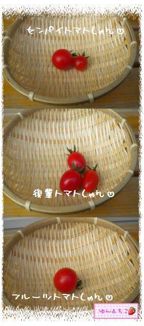 トマト観察日記★15★初収穫~-3