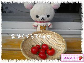 トマト観察日記★15★初収穫~-4