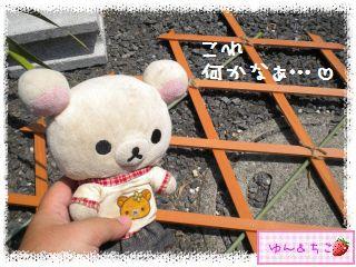 ちこちゃん日記★164★ゆんちゃん、何してるの??-2