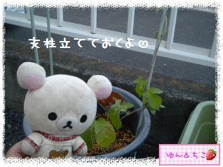 今年も始めました♪あさがお観察日記2013★1★-4