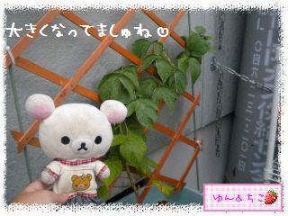 ちこちゃんのラズベリー観察日記★1★-4
