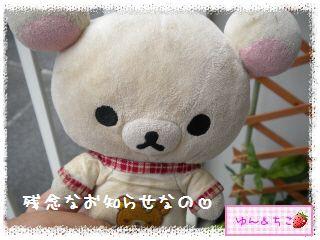 ちこちゃんのキャベツ観察日記★3★残念なお知らせ…-1