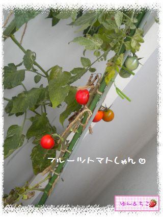 トマト観察日記★17★ベランダのトマトしゃん♪-4