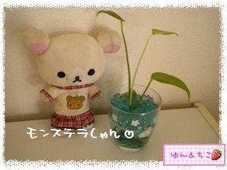 ちこちゃんの観葉植物観察日記★4★ぐ~ん-2