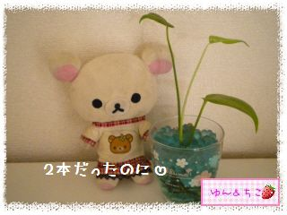 ちこちゃんの観葉植物観察日記★4★ぐ~ん-5