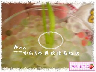 ちこちゃんの観葉植物観察日記★4★ぐ~ん-7
