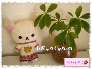 ちこちゃんの観葉植物観察日記★4★ぐ~ん-8
