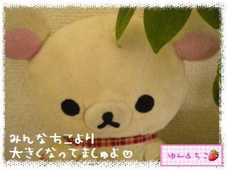 ちこちゃんの観葉植物観察日記★4★ぐ~ん-9