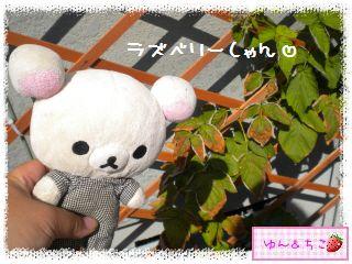 ちこちゃんのラズベリー観察日記★4★-1