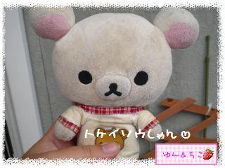 ちこちゃんのプランターガーデニング日記★6★トケイソウ②-1