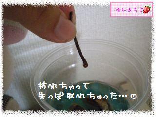 ちこちゃんのアボカド栽培日記★18★あれれれれ…-3