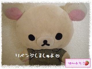 ちこちゃんのアボカド栽培日記R★1★リベンジ開始でしゅ-1