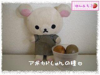 ちこちゃんのアボカド栽培日記R★1★リベンジ開始でしゅ-2