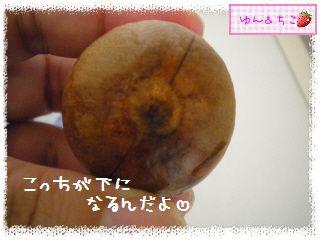 ちこちゃんのアボカド栽培日記R★1★リベンジ開始でしゅ-3