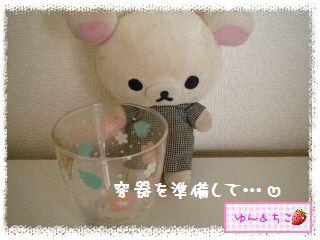 ちこちゃんのアボカド栽培日記R★1★リベンジ開始でしゅ-4