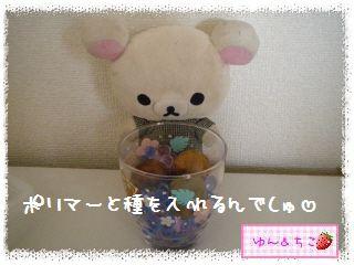 ちこちゃんのアボカド栽培日記R★1★リベンジ開始でしゅ-5