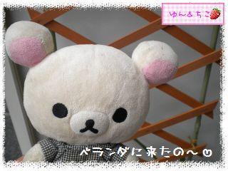 ちこちゃんのプランターガーデニング日記★9★マンデビラ③-1