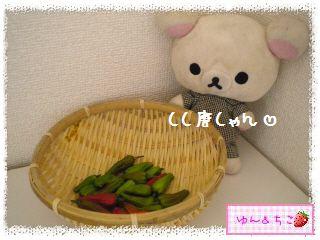ちこちゃんの夏野菜観察日記2013★しし唐しゃん★-2
