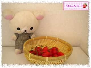 トマト観察日記★18★大収穫~-2