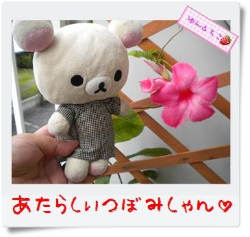ちこちゃんのプランターガーデニング日記★10★マンデビラ④-4