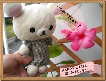 ちこちゃんのプランターガーデニング日記★11★マンデビラ⑤-4