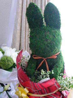 かおりんからのウサギの観葉植物♪
