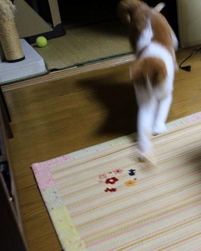 ブログNo.63(にゃんだ、これ?)4
