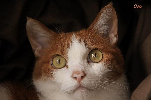 ブログNo.61(猫かまくら)1