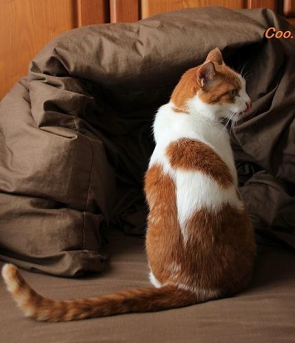ブログNo.61(猫かまくら)5