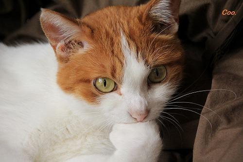 ブログNo.61(猫かまくら)9