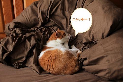 ブログNo.65(猫かまくらミニ)7