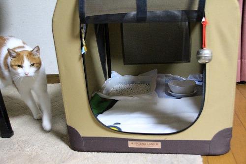 ブログNo.75(2つのトイレを使い分ける猫)4