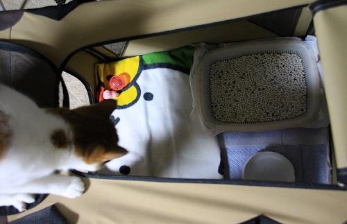 ブログNo.75(2つのトイレを使い分ける猫)5