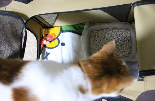 ブログNo.75(2つのトイレを使い分ける猫)6
