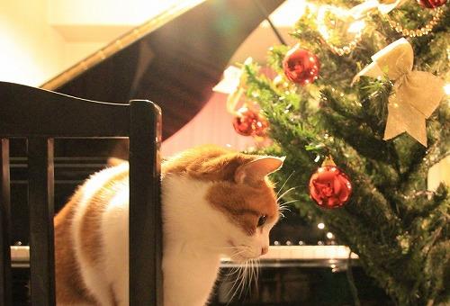 ブログNo.89(クリスマスツリー興味なし)5