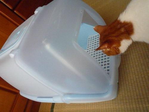 ブログNo.75(2つのトイレを使い分ける猫)1