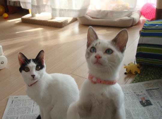 クララ&ルン
