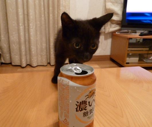 ビールを飲むさとる