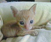 130815-3_convert_20130815100012.jpg