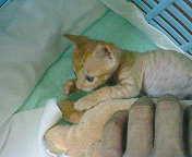 130815-5_convert_20130815100204.jpg