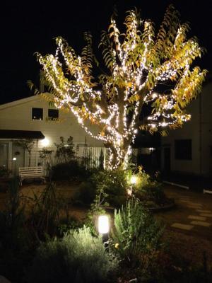 blog_christmas2014jt_2_convert_20141211231619.jpg