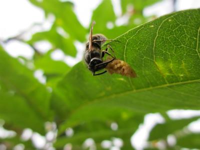 キャットフードをかじっている蜂