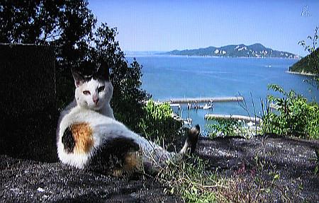 岩合光昭の世界ネコ歩き「瀬戸内海」