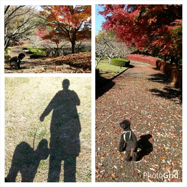 fc2_2014-11-27_21-14-01-686.jpg